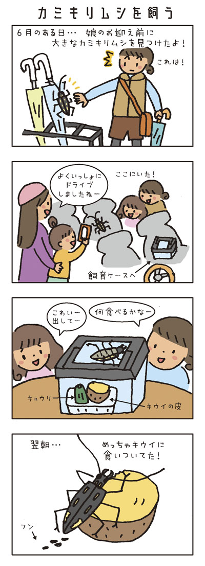 [カミキリムシを飼う] 6月のある日…娘のお迎え前に大きなカミキリムシを見つけたよ! お友だちのお母さん「よくいっしょにドライブしましたねー」 飼育ケースへ。 おうちで「何食べるかなー」 娘「こわいー」「出してー」 キュウリとキウイの皮を入れてみた。 翌朝…めっちゃキウイに食いついてた!